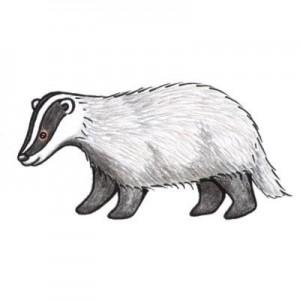 Badger 300x300 badger